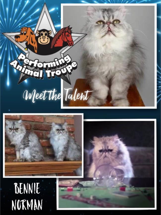 Meet the Animal Talent at Performing Animal Troupe!
