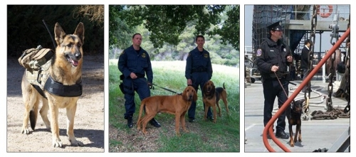 Dogs and Handlers for Police, Military and 