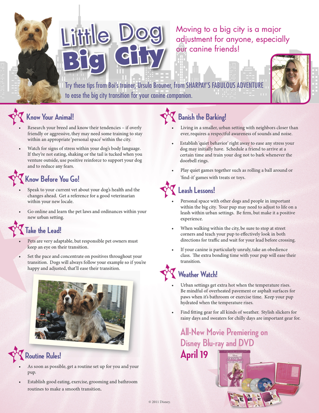 Little Dog: Big City! Life with a Metropolitan Pet!