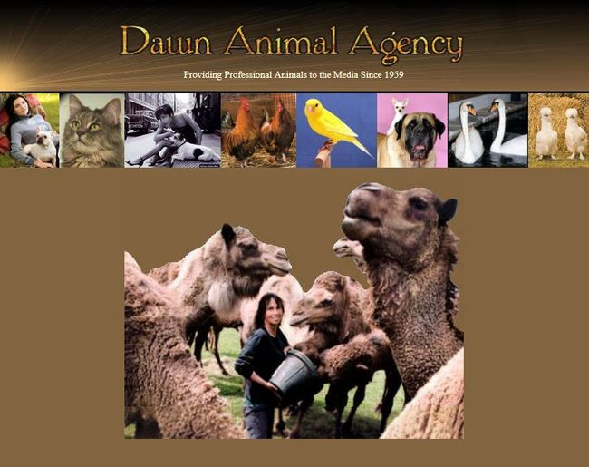 Dawn Animal Agency Provides Creatures on Camera