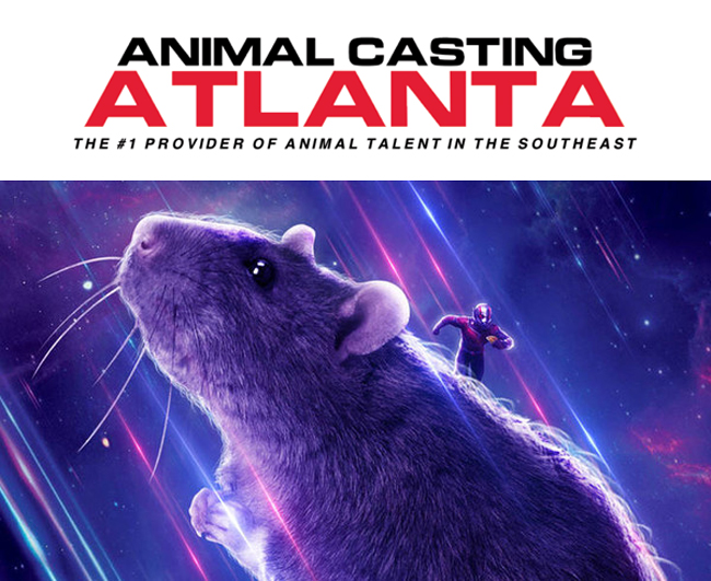Animal Casting Atlanta and Avengers: End Game...