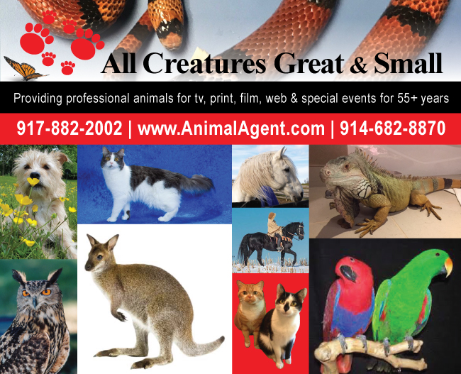 All Creatures Great and Small ongoing SERESTO dog TV, print & video campaign