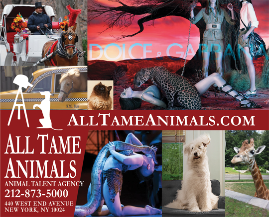 All Tame Animals: Trainers are ready to work now!