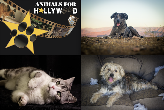 Animals For Hollywood: Welcome to the Family!