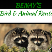 BENAY'S Bird & Animal Rentals