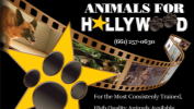 Animals for Hollywood: an expansion of Boone's Animals