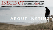 About The Instinct Experience