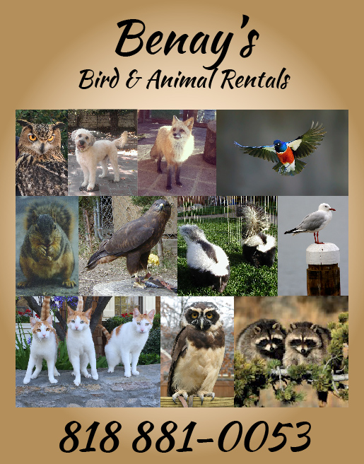 BENAY'S BIRD<br />AND ANIMAL RENTALS